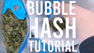 MAKING HASH: TURNING SHAKY TRIM INTO BUBBLE HASH