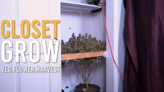 CLOSET GROW HARVEST: START TO FINISH ( FULL CYCLE )