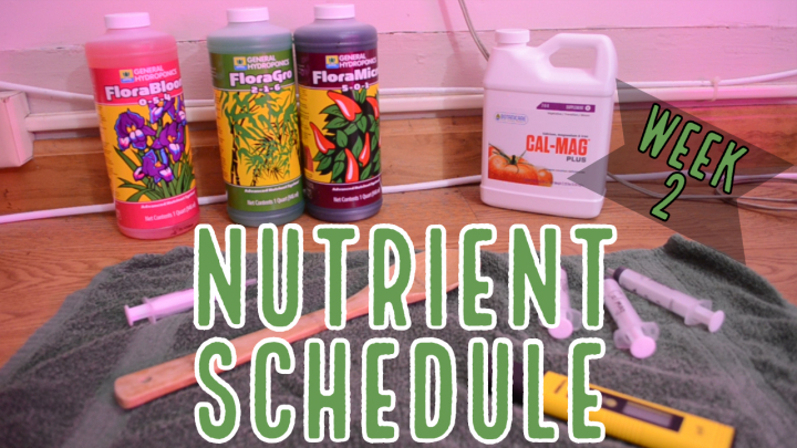Week 2: How to Feed Autoflowers - Our Nutrient Schedule