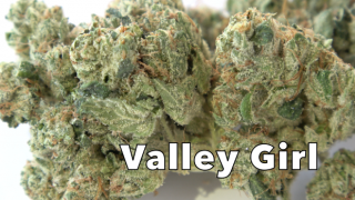Valley Girl (30.50% THC) (Strain Review #6)