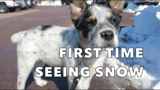 My Puppy's First Snow Trip