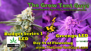 Budget Series 1 LED vs Greengo LED Day 44 Flower