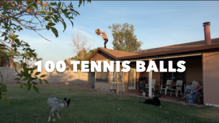100 TENNIS BALLS OFF MY ROOF FOR MY DOGS!!!