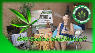 GMO Cookies Concentrate Weed Review @MPX And @nirvanacenter