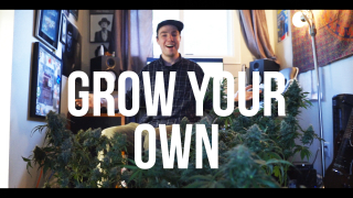 Grow 4 - Introduction & Chop Day!