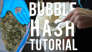 MAKING HASH: TURNING SHAKY TRIM INTO BUBBLE HASH (Guide for Beginners)
