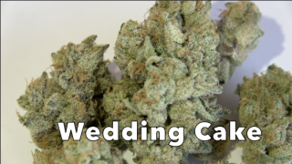 Wedding Cake (29.2% THC) (Strain Review #10)
