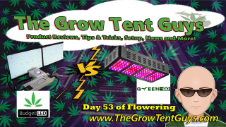 Day 53 of Flowering between the Budget Series 1 LED vs the Greengo Model 1200W LED Grow lights