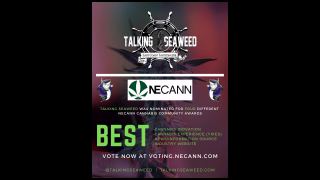 TALKING SEAWEED - HOW WE GOT NOMINATED FOR FOUR NECANN AWARDS
