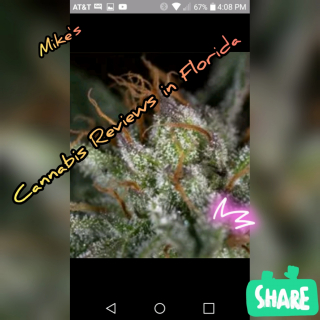 gg4 from curaleaf in florida