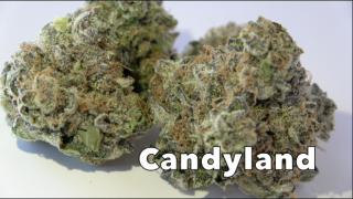 Candyland (29.1% THC) (Strain Review #11)