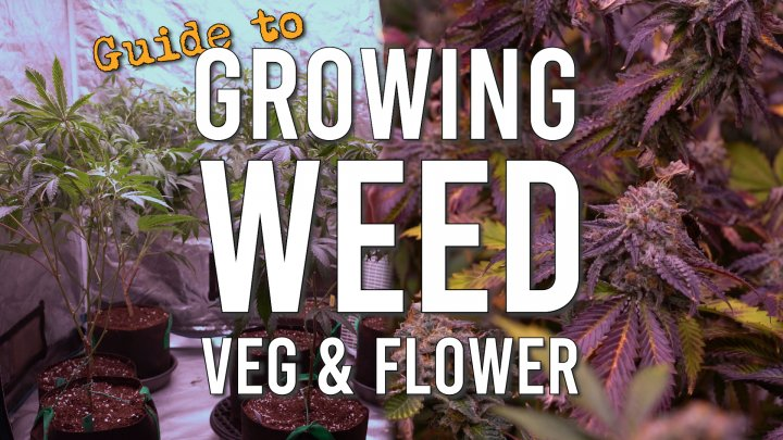 COMPREHENSIVE GUIDE TO GROWING WEED: THE VEG & FLOWER CYCLE