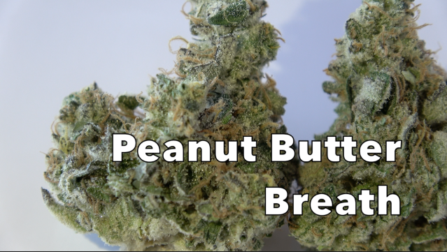 Peanut Butter Breath (27.8% THC) (Strain Review #12)