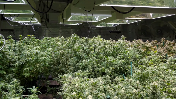 The EASIEST WAY to keep BUGS and DISEASE out of your Grow