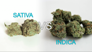 What Is It? - Sativa vs Indica