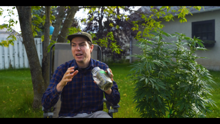 Grow 4 - Pick what I GROW NEXT! Plus - What nobody is talking about when curing cannabis!
