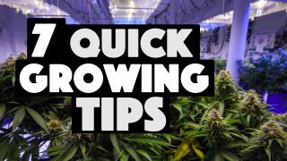 7 Quick Marijuana Growing Tips & Tricks (How To Grow Cannabis)