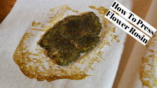 How To Press Flower Rosin