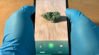 Grade the quality of your weed on your phone!!
