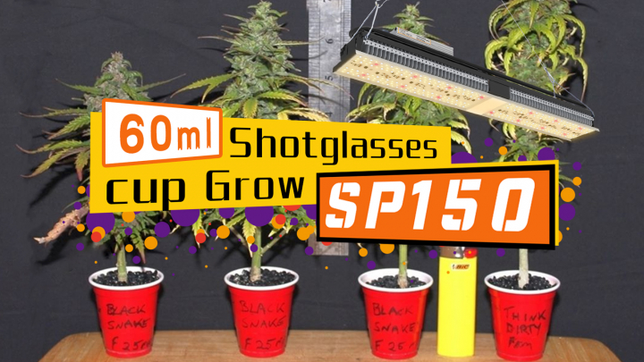 60ml shotglasses weed grow journal with 2 Mars Hydro SP150 LED grow light
