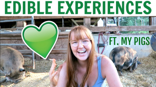 EDIBLE EXPERIENCES | STORYTIME