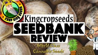 Crop King Seeds Company Review (Marijuana Seeds Bank Review)