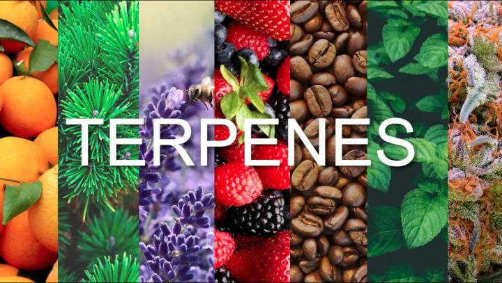 What is It? - Terpenes
