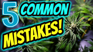 5 COMMON MISTAKES NEW CANNABIS GROWERS MAKE!