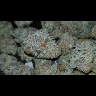 PURPLE PUNCH STRAIN REVIEW !!!!