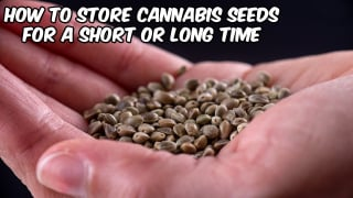 2 Simple Methods On How To Store Cannabis Seeds