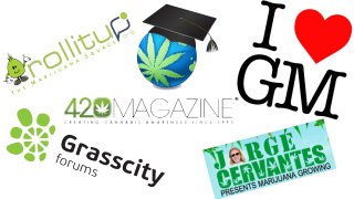The Top 5 Cannabis Growing Forums Ranked - Lex Picks