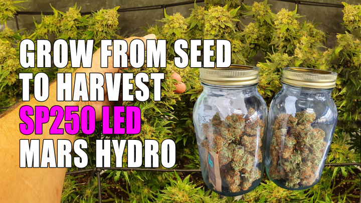 Cannabis grow journal from seed to harvest by Mars Hydro SP250 LED grow light in 3x3 grow tent