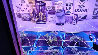 TNB Naturals products working great in the garden - daleski 420 /TNB Naturals with the garden update featuring TNB Naturals natural CO2, pH UP & DOWN and The Enricher