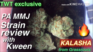 Pennsylvania MMJ Strain Review with Kween ~ Kalasha from Grassroots