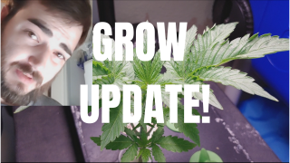 Hydroponic Grow Update ( I Need New Lights! )