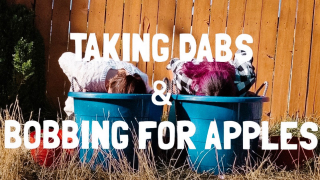 DABBING FOR APPLES | CHALLENGE