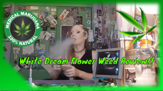 White Dream Flower Weed Review From @Curaleaf And Smoke Sesh