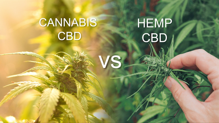 What Is It? - Cannabis CBD vs Hemp CBD