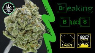 BREAKING BUDS #1 - LIMEADE + SOUR TANGIE