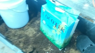 HOW I BLEND COCO & PERLITE TO UNLOCK MY PLANTS (Exclusive Daily WeedTube Upload)