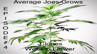 EPISODE 4.. MULTI-STRAIN L.E.D. GROW