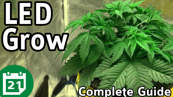 Building Your Cannabis Plants Foundation / Grow Guide Ep5