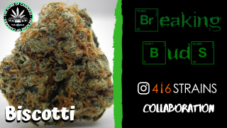 BREAKING BUDS #2 - BISCOTTI (416 STRAINS COLLAB REVIEW)