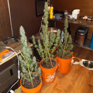1st time grow. help with find strain names please
