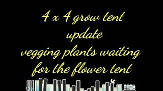 4 by 4 vegetation tent