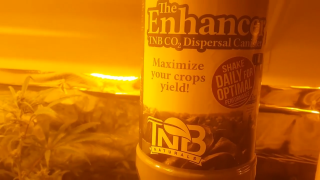Weed legend 420 Canna vs elite introducing TNB NATURALS