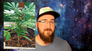 3 Different Types of Cannabis   BammerTV