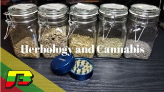 Mixing Herbology and Cannabis   BammerTV