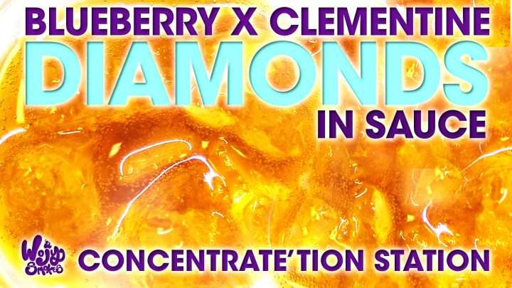 WojySmokes Concentrate'tion Station: Revolution Blueberry  X Clementine Diamond Sauce Review