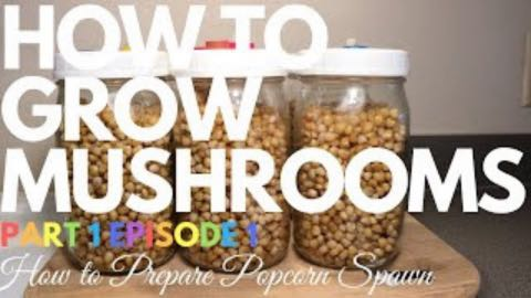 How To Prepare Popcorn Spawn Jars | How To Grow Magic Mushrooms | Part 1 Episode 1